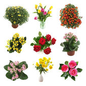 Bouquets of flowers isolated on white background — Stock Photo