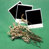 Vintage photos and flowers on a green background — Stock Photo