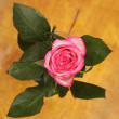 Pink rose in vase on a wooden table - Stock Photo