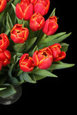 Bouquet of red tulips in a vase on black — Stock fotografie