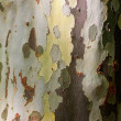 Close up of tree bark  — Stock Photo