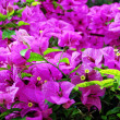 Stock Photo: Purple flowers. natural landscape with flowers