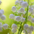 Closeup lily of the valley on natural background — Photo