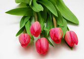 Pink tulips isolated on white — Stockfoto