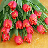 Red tulips isolated on wood  — Stockfoto