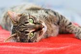 Cat relax — Stock Photo