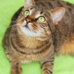 Cat on green — Stock Photo #44009461