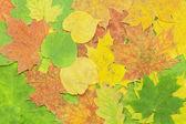 Hojas de diferentes árboles en el otoño — Foto de Stock