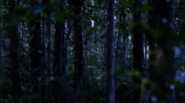 Mystical creature wearing a long cloak in the dark forest — Stock Video #14050945