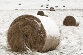 Snow covered hay rolls on a snowy field — Stock Photo