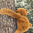 Toy bear climbing  on a tree in forest — Stock Photo