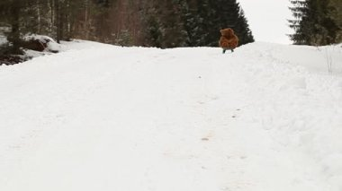 Toy bear on sled riding down the hill — Stock Video