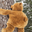 Teddy bear climbing on a tree in forest — ストック写真