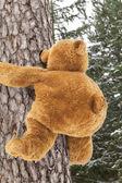 Oso de peluche de escalada en un árbol en el bosque — Foto de Stock