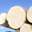 Large logs stacked on a blue sky background — Stock Photo