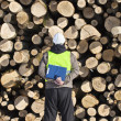 Stock Photo: Forester with folder opposite logs off pile