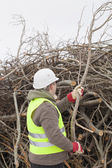 Worker with a branch in hands at the big pile of twigs — Stock Photo