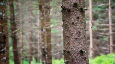 Człowiek rzuca ax drzewo odcinek 2 — Wideo stockowe