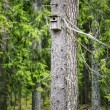 Bird house in the forest on the pine — Stock Photo
