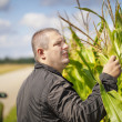 Farmer near the corn field in summer — Stock Photo