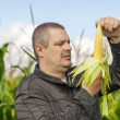 Farmer on the corn field in summer — Stock Photo