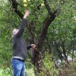 Man try cast off apple in garden episode 1 — Stock Video