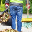 Man with brush and rake collects leaves — Stockfoto