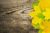 Autumn maple leaf on old wooden board — Stock Photo