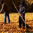 People collects leaves in the fall episode 4 — Stock Video