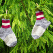 Pair of woolen socks hanging on fir in forest — Stock Photo #35966091