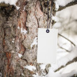 Cardboard label on pine tree in forest — Stock Photo