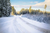 Road with snow through the woods — Stock fotografie