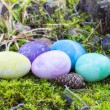 Stock Photo: Easter eggs in different colors on moss in forest