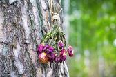 在森林里的树上挂着的干玫瑰的花束 — 图库照片