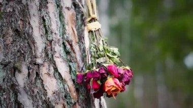 Bouquet von getrockneten rosen — Stockvideo
