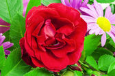 Rose with a variety of flowers and green leaves — Stock Photo