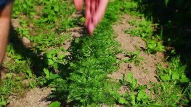 Weeding the garden — Stock Video
