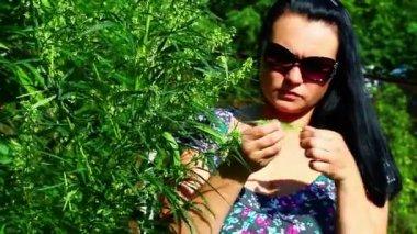 женщина на растения каннабис — Стоковое видео