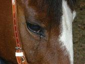 Tender Horse — Stock Photo