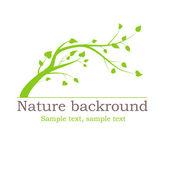 Rama de un árbol verde con hojas — Vector de stock