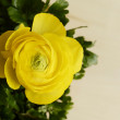Yellow flower closeup — Stock Photo