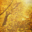 Autumn trees background — Stock Photo