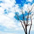 Blue sky and died tree — Stock Photo