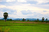 Field and landscape — Stock Photo