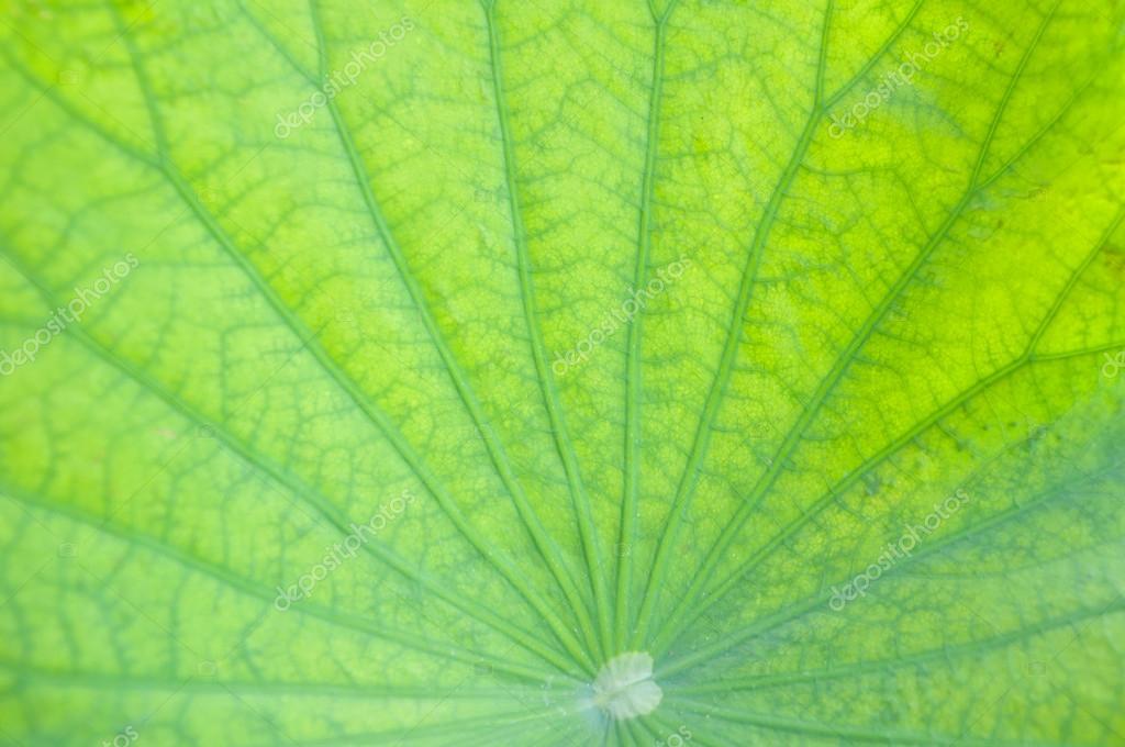 背景 壁纸 绿色 绿叶 树叶 植物 桌面 1024_680