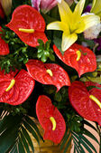 Red Flamingo flower — Foto de Stock