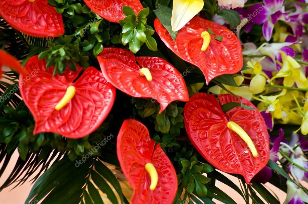 R d flamingo blomma stockfotografi buffaloboy2513 34021113 - Variedades de plantas de interior ...