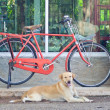 Red vintage bicycle — Stok Fotoğraf #34469871