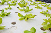 Hydroponic technology — Foto Stock