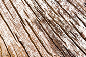Dried tree wood — Stock Photo